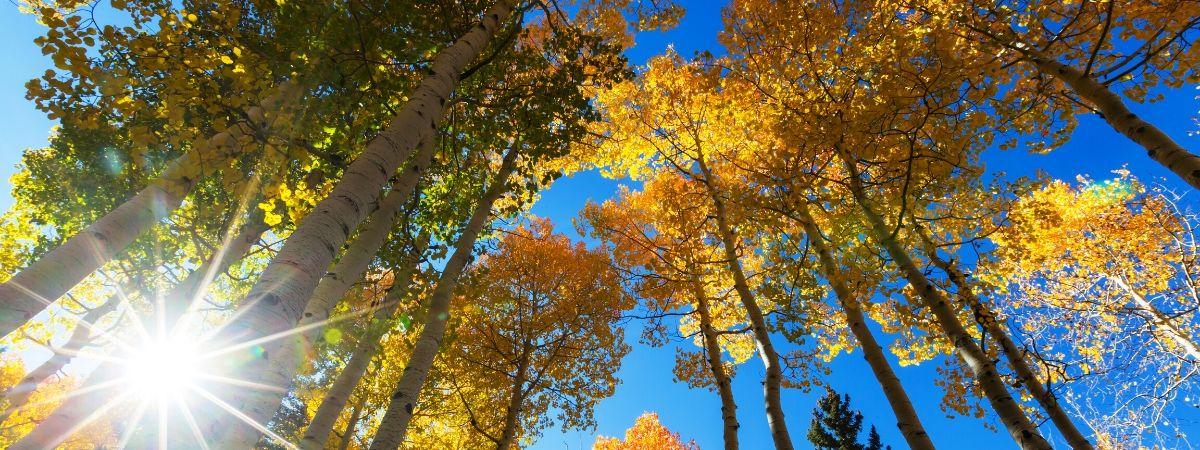Herbstgruppe Meditation