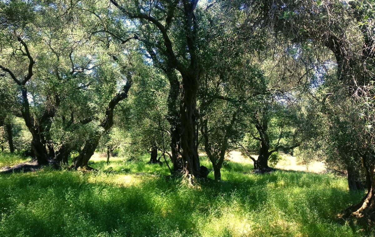 Buddhafield Korfu