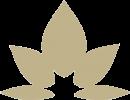 Nicole Stern logo